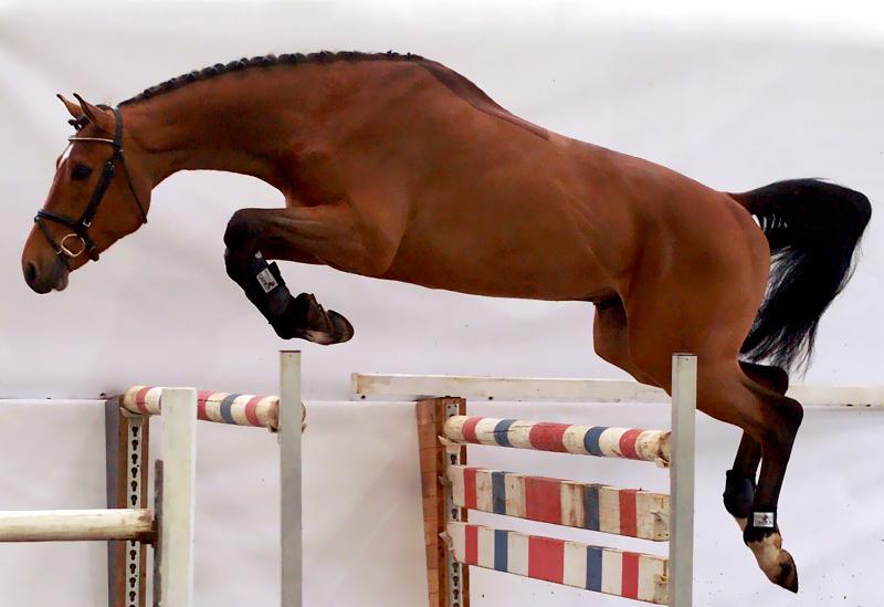ausbildung von pferd und reiter lucas sporthorses. Black Bedroom Furniture Sets. Home Design Ideas